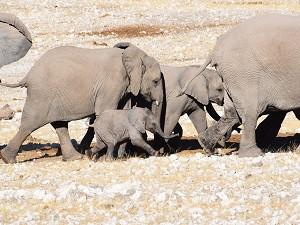 Elefanten BILD