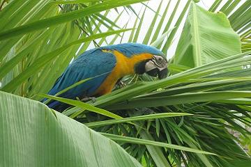 Costa Rica - Von der Karibik zum Pazifik