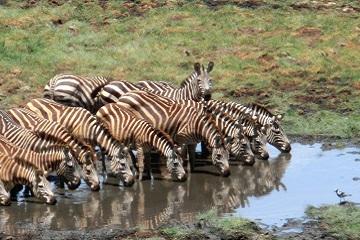 Tansanias Höhepunkte